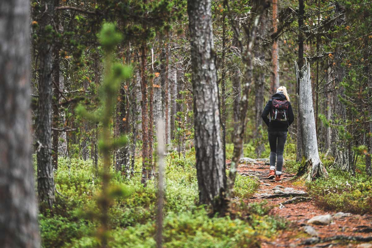 Frau wandert durch den Lemmenjoki Nationalpark in Finnland