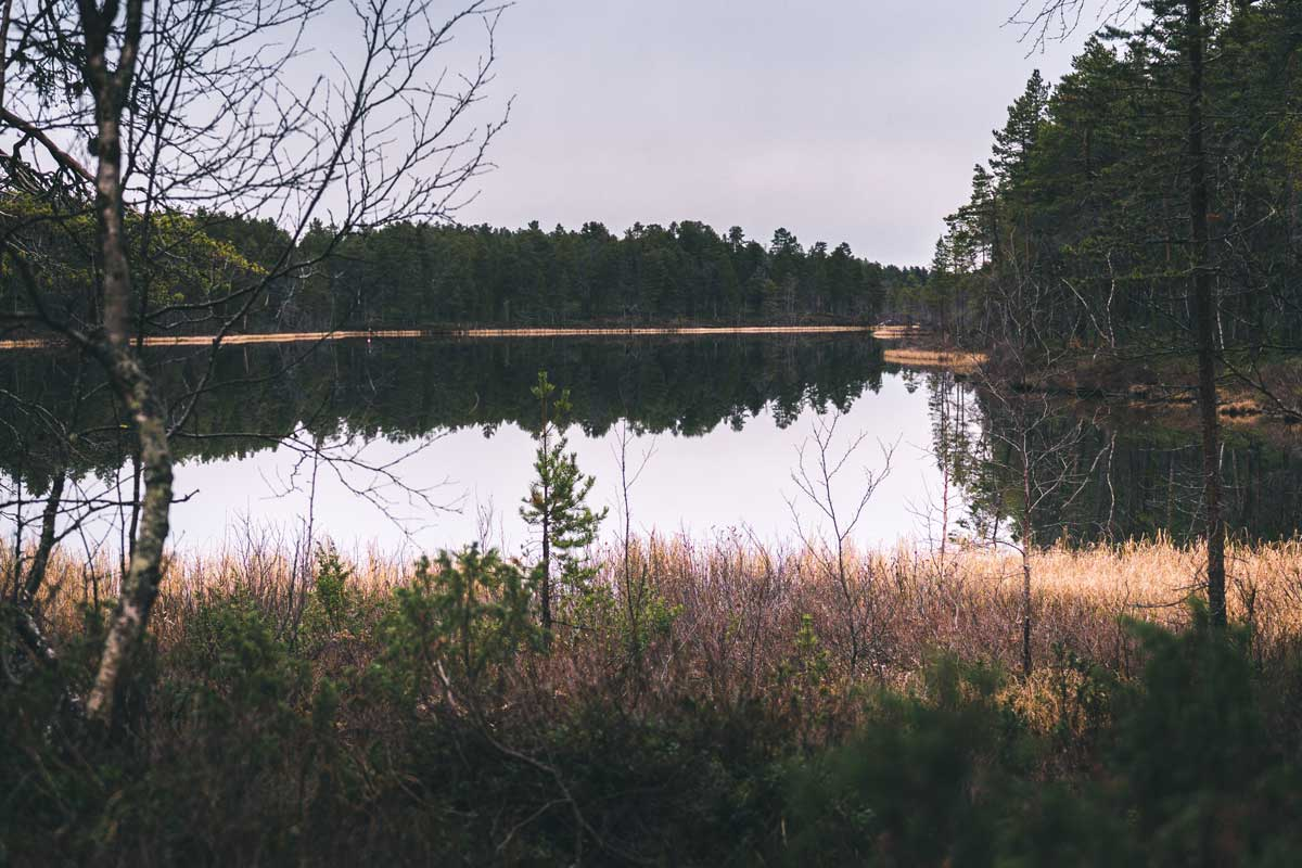See in Wald des Lemmenjoki Nationalpark in Finnland